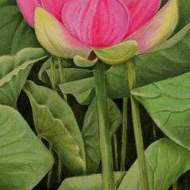 Mary Deal - Pink Lotus And Leaves