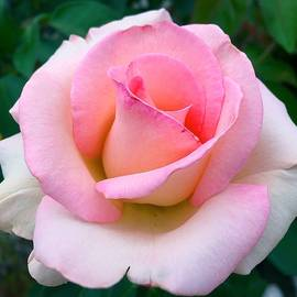 Pink Love by Wonju Hulse