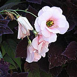 Nancy Kane Chapman - Pink Loveliness