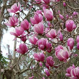 Carol Groenen - Pink Magnolia Perspective