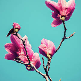 Svetlana Yelkovan - Pink Magnolia