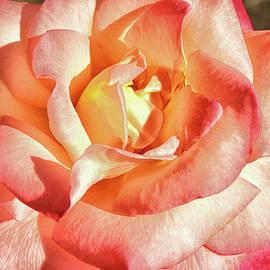 Linda Brody - Pink Orange Yellow Rose I
