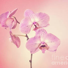 Linda Phelps - Pink Orchids 2