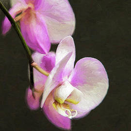 Sharon McConnell - Pink Orchids On Black