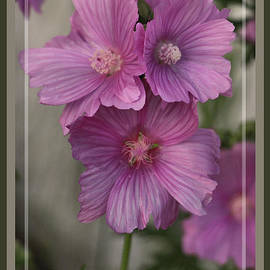 Sandra Huston - Pink Passion, Framed