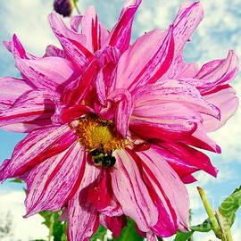 Ed Weidman - Pink Petal Passion