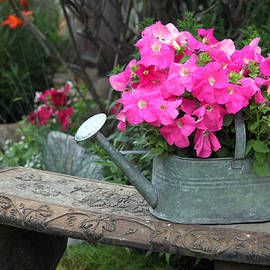 Pink Petunias In Watering Can  by Sandra Foster
