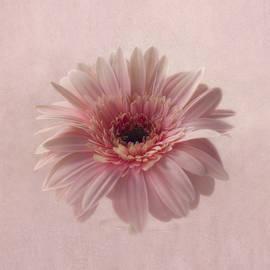 Pink Pink Pink by Kim Hojnacki