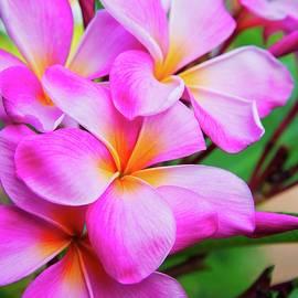 Lynn Bauer - Pink Plumeria Love