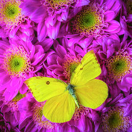 Garry Gay - Pink Poms And Yellow Butterfly
