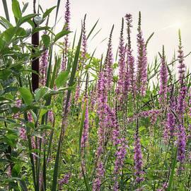 Marianne Campolongo - Pink Purple Beach Flowers