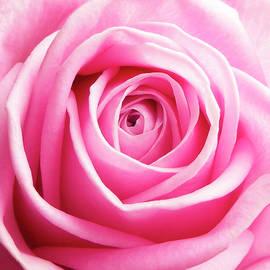 Johanna Hurmerinta - Pink Rose 5