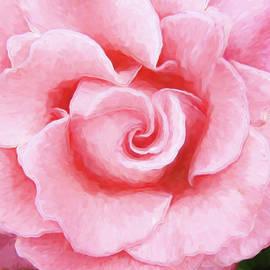 Allen Beatty - Pink Rose
