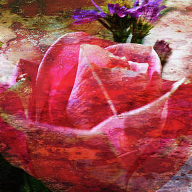 Marie Jamieson - Pink Rose Featured