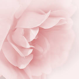 Jennie Marie Schell - Pink Rose Flower Tranquillity
