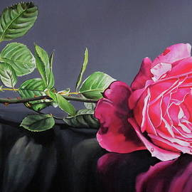 Pink rose in repose by Lillian  Bell