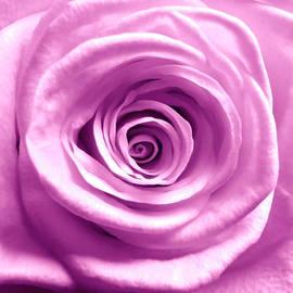 Johanna Hurmerinta - Pink Rose Macro HDR