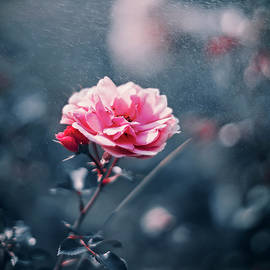 Oksana Ariskina - Pink Romantic Rose
