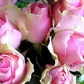 Pink Roses by Marina Usmanskaya