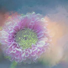 Terry Davis - Pink Splash on Blue