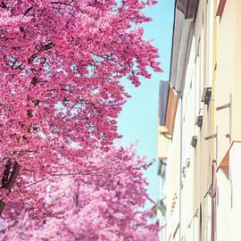 Jenny Rainbow - Pink Spring Bloom on Street