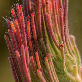 Pink Tips by Tania Read