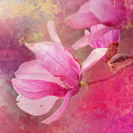 Jai Johnson - Pink Tulip Magnolia In Spring