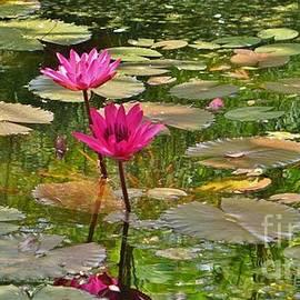John Clark - Pink Water Lilies
