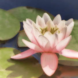 Ann Powell - Pink Water Lily - photograph