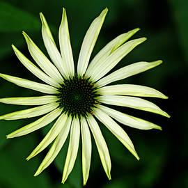 Pinwheel by Debbie Oppermann