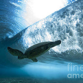 Pipe Turtle Glide  -  part 3 of 3 by Sean Davey