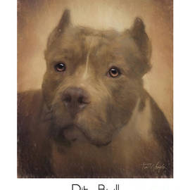 Pit Bull Poster by Tim Wemple