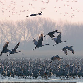 Platte River Morn by Susan Rissi Tregoning