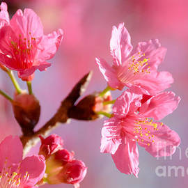 Andrea Anderegg - Plum Blossom 2