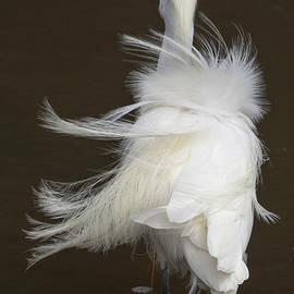Plumage in the Breeze by Bruce Frye