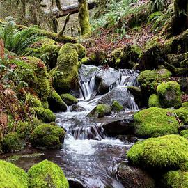 PNW Forest by Steven Clark