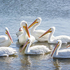 Dawn Currie - Pod of Pelicans I