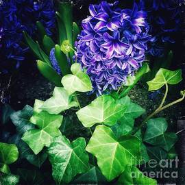 Poetry in Blue and Green - Hyacinths by Miriam Danar
