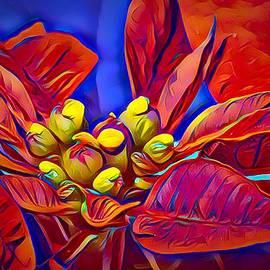 Poinsettia Closeup by Anne Sands