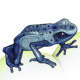 Poison Dart Frog by ZH Field