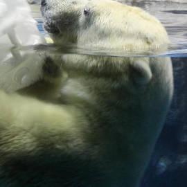 DejaVu Designs - Polar Bear Submerged Partially Under Water