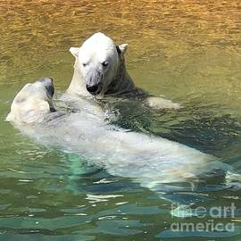 Polar Bears by Laurie Lundquist