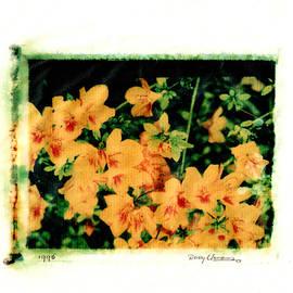 Polaroid Flowers by Rudy Umans
