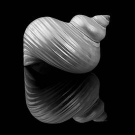 Polished Turban Shell and reflection by Jim Hughes