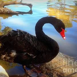 Pondering Swan by Noa Yerushalmi