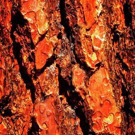 Ponderosa Pine Macro Trunk Abstract No. 01 by Roger Passman