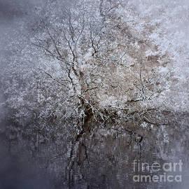 Ron Evans - Pondside Tree