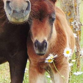 Honey Behrens - Pony Pony