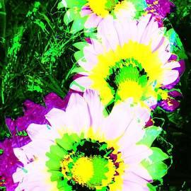 POP Art Flowers by Jenny Revitz Soper