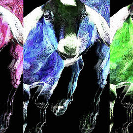 Pop Art Goats Trio - Sharon Cummings by Sharon Cummings